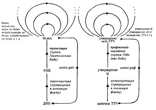 Рис. 15. Автореференция ТТЧ и авторепродукция ДНК