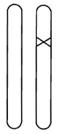 Рис. 4. Гетерозиготный мутант