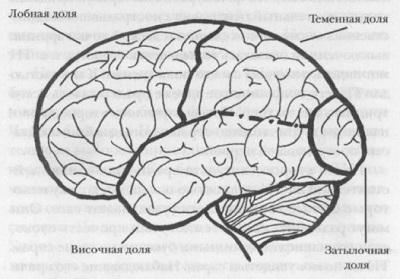 02. Структура неокортекса (новой коры головного мозга).