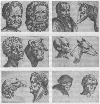 03. Люди, категоризированные по их внешней схожести с различными животными