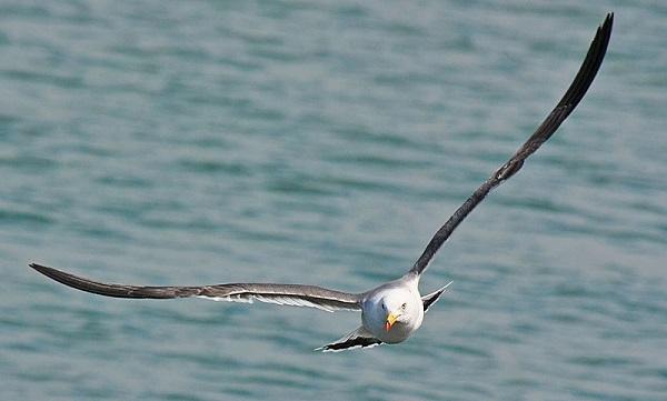 Чайка2