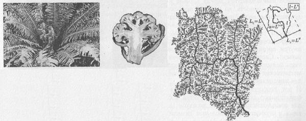 Рис. 3.6. Лист папоротника, цветная капуста, структура ручья