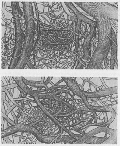 Рис. 3.7. Фрактальная жизнь, строение кровеносной системы
