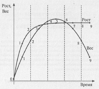 Рис. 4.1. Зависимость роста и веса кошки от времени