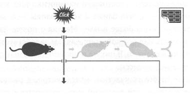 Рис. 1. Т-образный лабиринт в эксперименте с крысами