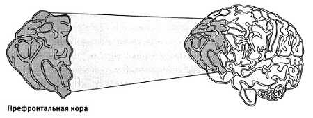 Рис. 2. Префронтальная кора помогает нам сосредоточиться на решении задачи