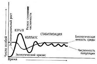 Рис. 8. Эволюция популяций