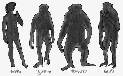 Рис. 1. Представители родов Pan и Homo