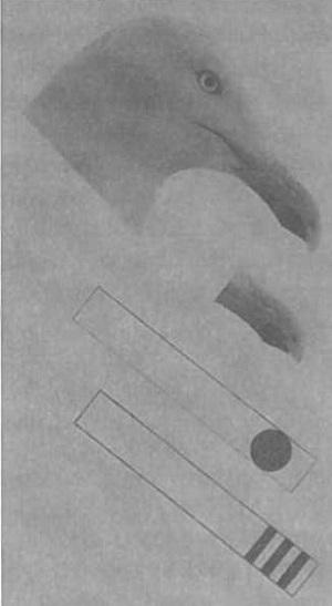 Рис. 8. Птенец чайки тычется клювом в модель клюва